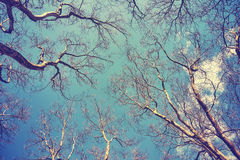 Looking up at the leafless tops of plane trees. Retro stylized picture stock image