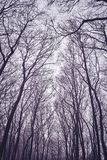 Looking up at leafless tree branches silhouettes. Natural background, color toning applied stock photos