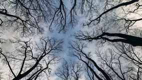 Looking Up Into Tree Branches and Sky Time Lapse. Looking Up Into Leafless Tree Branches and Sky Time Lapse stock footage