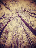 Looking up through leafless trees. Stock Image