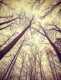 Looking up through leafless trees. Retro filtered background stock photo