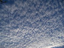 Looking up at a mackerel sky early in the morning. Looking up at a still dark blue sky full of puffy rows of clouds in a mackerel sky early in the morning stock photo
