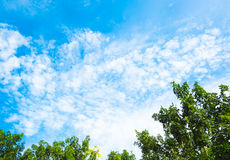 Looking up at nice blue sky with tree Royalty Free Stock Photos
