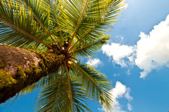 Looking up a palm tree Royalty Free Stock Photo