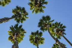 Looking up the palm tree with blue sky Royalty Free Stock Photo