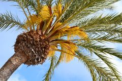 View on to tropical palm tree background stock photos