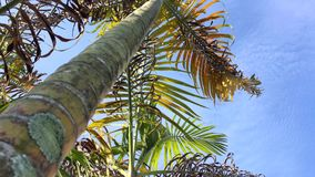 Palm trees on blue sky background. Looking up palm trees with blue sky background stock footage
