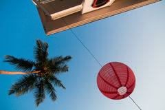 Looking up of palm trees Stock Images
