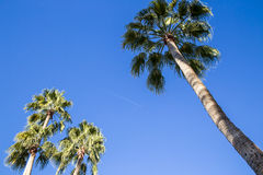 Looking Up at the Palm Trees Stock Photo
