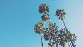 Looking up a the Palm Trees in the Sun Stock Image