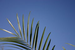 Looking up at palms royalty free stock photo