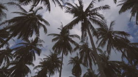 Looking up at rotating palm trees in Phuket, Thailand stock footage