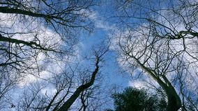 Looking Up At The Sky Through Tree Branches stock video