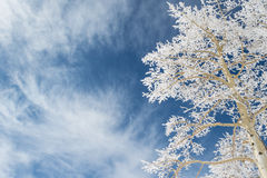 Looking up at a snow tree Stock Images