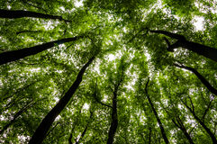 Looking up at tall trees in a forest in Shenandoah National Park stock photos