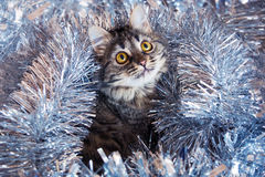 Сat looking up in the tinsel. Stock Photos