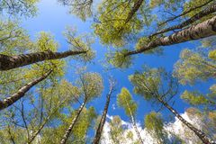 Looking up to the sky in forest Stock Photos