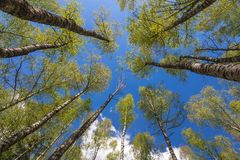 Looking up to the sky in forest Stock Images