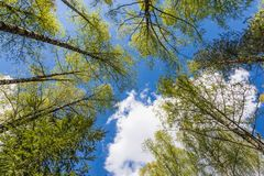 Looking up to the sky in forest Royalty Free Stock Photography