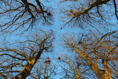 Looking up to the sky through trees Royalty Free Stock Images