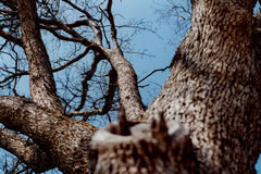 Looking up the tree 1 Royalty Free Stock Photography