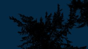 Looking Up At Tree Branches In The Dark. Large tree branches move in the wind overhead at night stock video