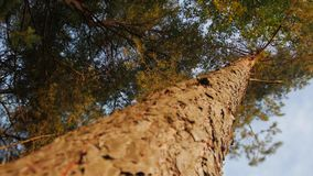 Looking up at tree canopy on sunny day. Tilt shift lens stock video footage