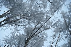 Looking up the tree tops snow covered branches. Cold winter day through the woods with a snow covered tree branches looking up to the sky. photo manipulated to royalty free stock photos
