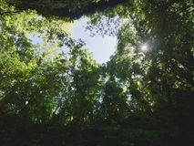 Looking up trees. In the forest Stock Photography