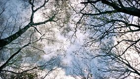 Looking Up At Trees And Sky stock video footage