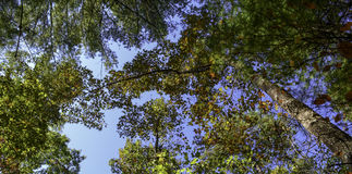 Looking up at the trees in South Mountain stock image