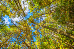 Looking Up At Trees in Wide Angle Stock Image