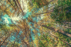 Looking Up At Trees in Wide Angle - Vintage, Faded Stock Photo