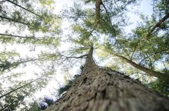 Looking up from under sea oak tree forest with worm eye view concept Stock Image