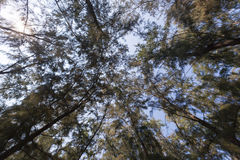 Looking up under the tree Royalty Free Stock Photos