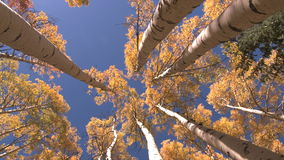 Looking up view of trees stock video footage