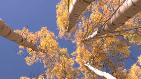 Looking up view of trees zoom out. Video of looking up view of trees zoom out stock video footage