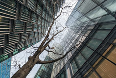 Looking up at young tree surrounded by skyscrapers Royalty Free Stock Images