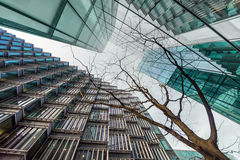 Looking up at young tree surrounded by skyscrapers Royalty Free Stock Photo
