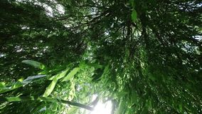 Looking upward through tree leaves in breeze of a weeping willow tree with the sun through the leaves. Looking upward through tree leaves in breeze of a weeping stock footage