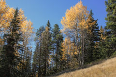 Looking upwards from a clearing. View of trees from a peaceful mountainside clearing Royalty Free Stock Images