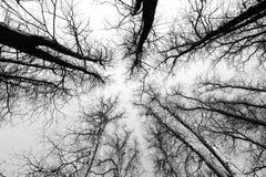 Looking upwards Stock Photography