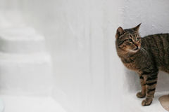 Looking What !!. A cat looking for somthinng Royalty Free Stock Photo