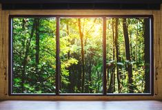 Looking through window, tropical forests in sunrise view. Looking through window , tropical forests in sunrise view royalty free stock images