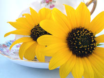 Looking at you. A still life of a cup of freshly cut sunflowers Royalty Free Stock Photos