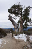 Lookout at Mount Hotham Royalty Free Stock Image