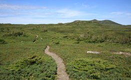 The Lookout Trail in Newfoundland Royalty Free Stock Photos