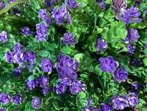 Purple man-made flower `planted` in the ground royalty free stock photos
