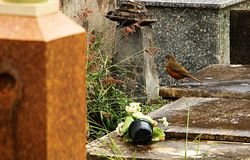 The little bird. He looks startled at the lens. Nothing to worry about royalty free stock photo