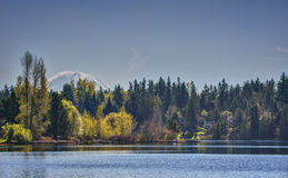 Mount Rainier behind Spring Trees on Lake. Mount Rainier Hides beneath the Early Spring Foliage and Lakes of the Pacific Northwest Stock Images